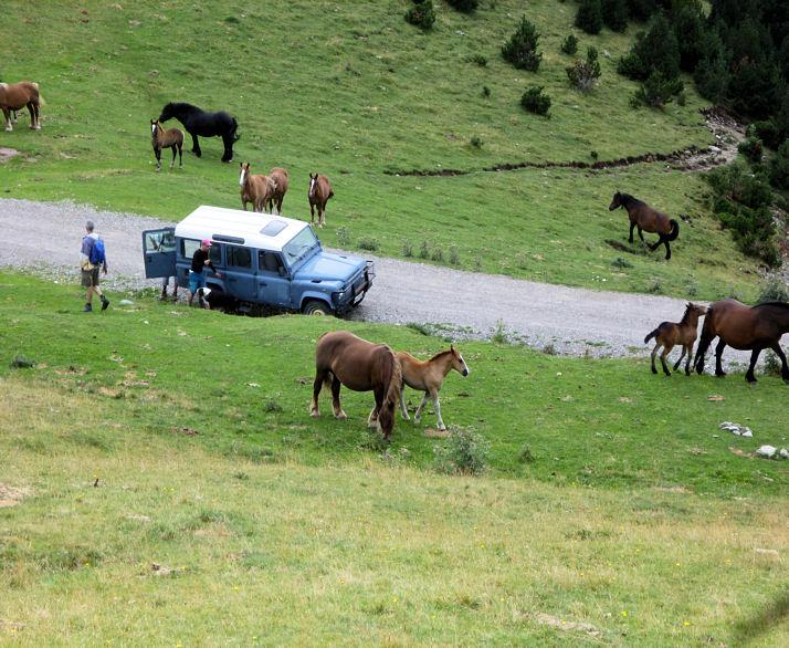 Transhumance chevaux de la Costa de Dalt